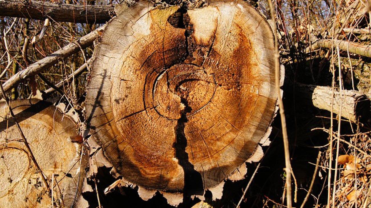 rez-kmenom-stromu