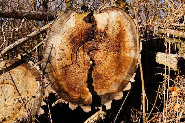 IGNIS krby - biomasa
